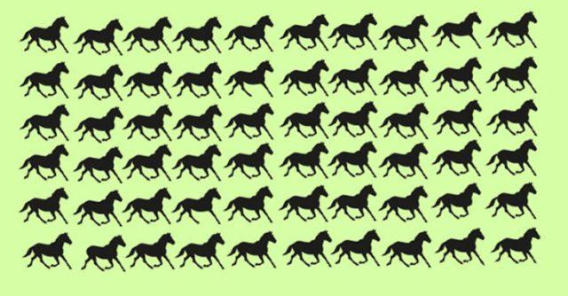 solución halla a los caballos