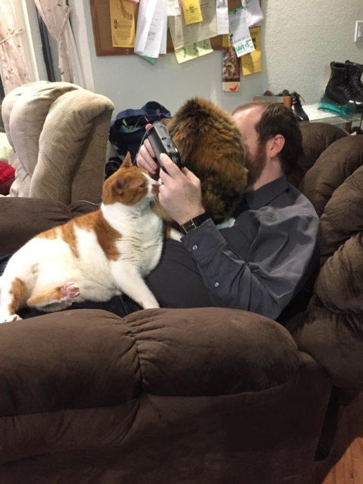gatos sobre un humano