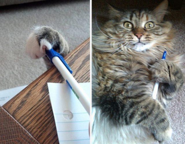 Gatos tiernos versista secreto