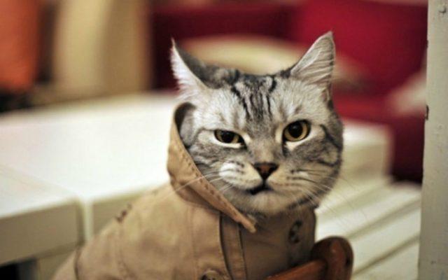 Gatos tiernos es guapo y lo sabe