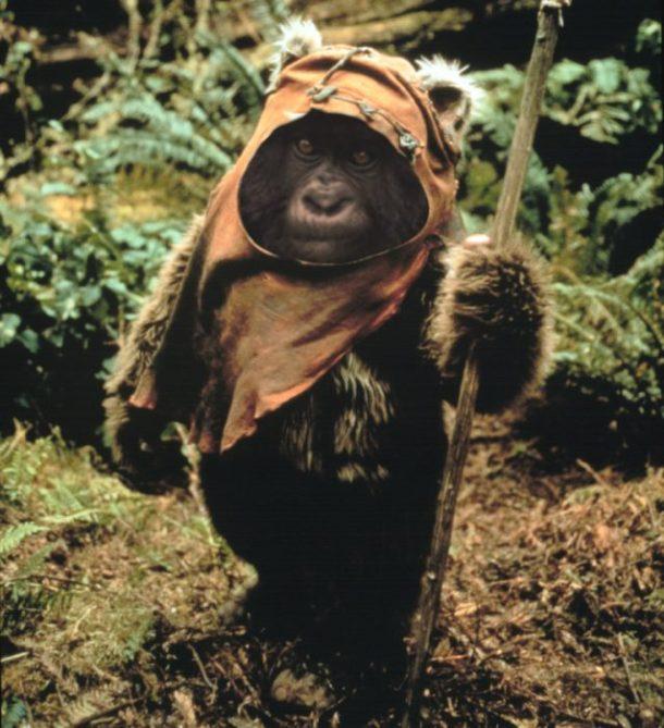 el ultimo gorila