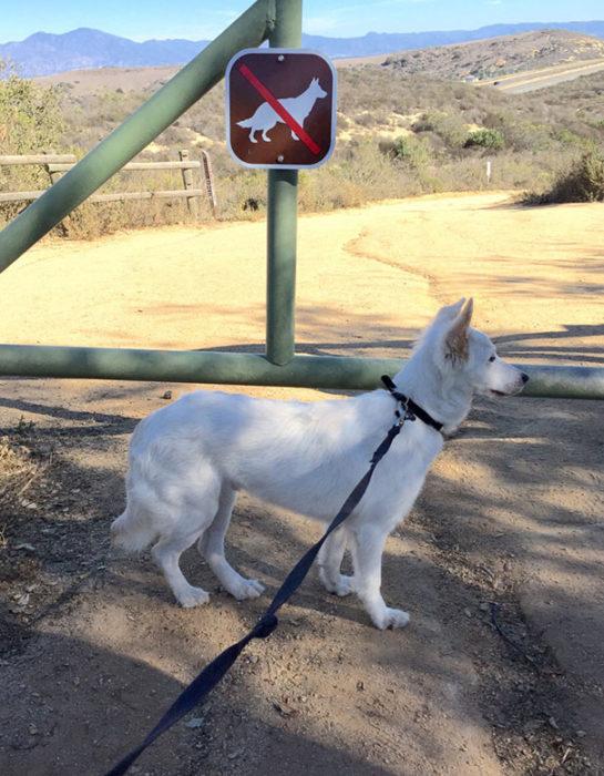 perro blanco correa