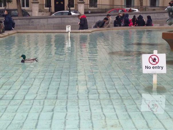 pato en fuente