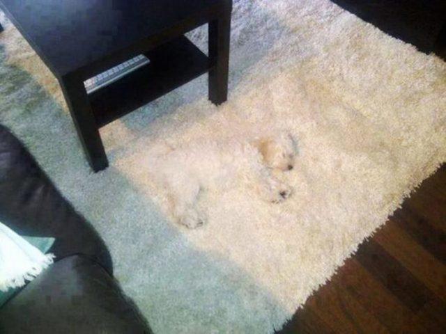 perro alformbra