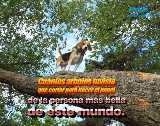 beagle oración motivadora