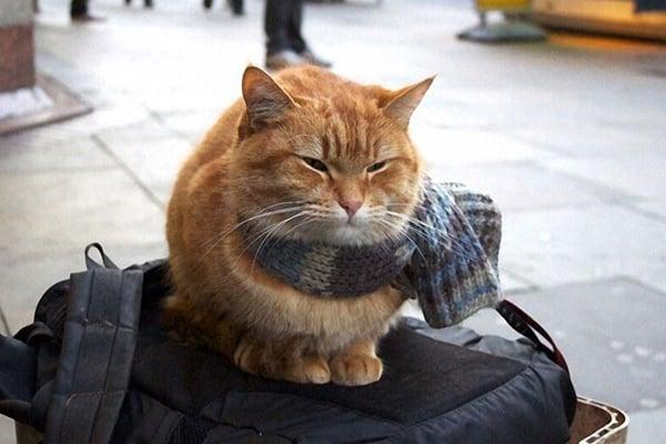 gato bufanda triste