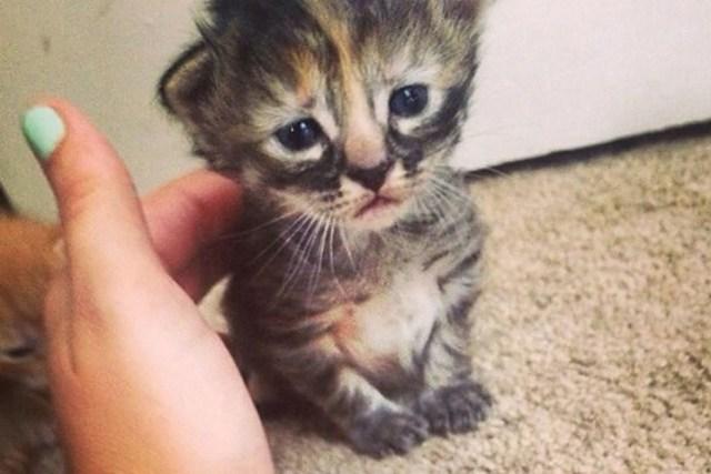gatito cachorro triste