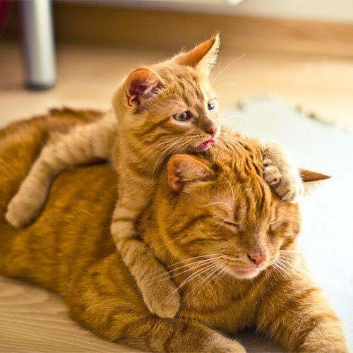 abrazo cabeza gatitos mantequilla
