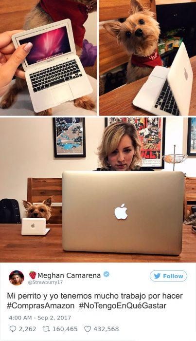 perro computadora lap