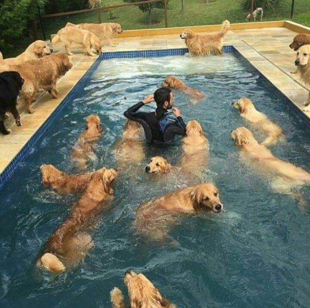 fiesta perruna en la piscina