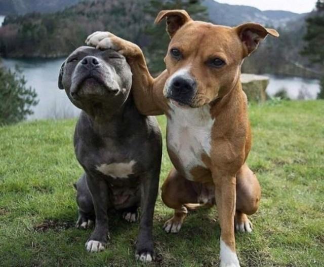 perros reunión de fotos