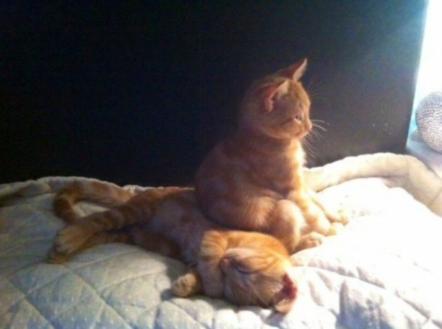 gato sobre su mamá