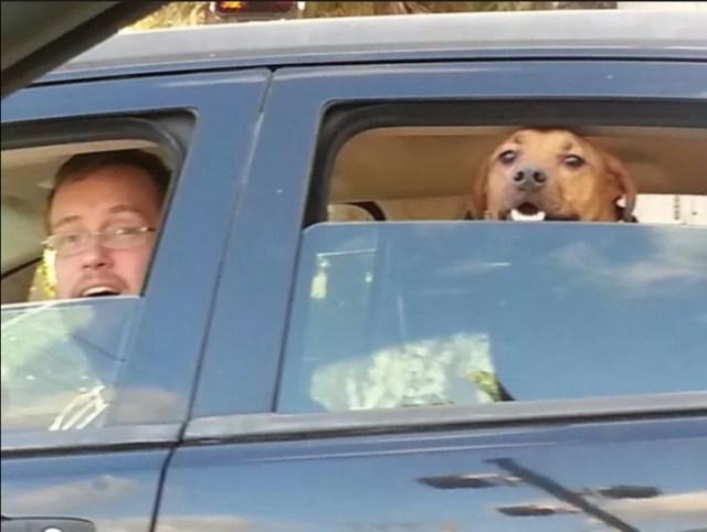 perro y propietario carro