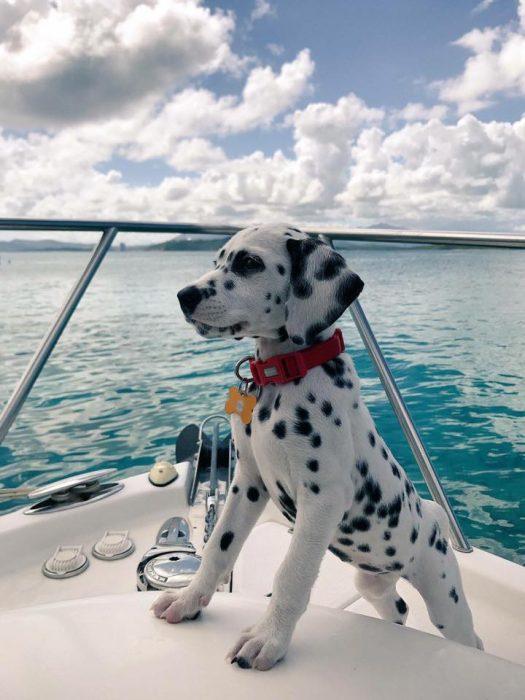 perrito bote