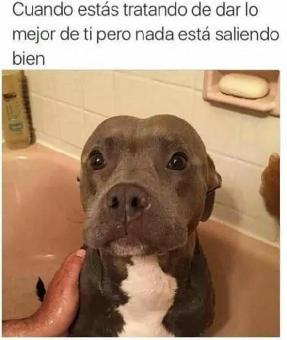 perrito atemorizado los mejores memes de perritos