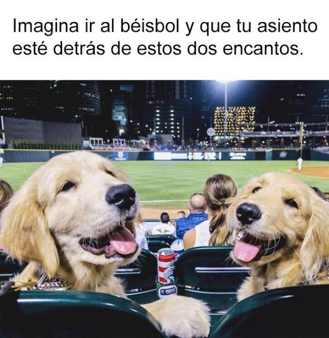 perritos juego