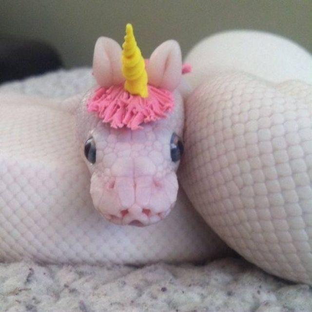 víbora unicornio