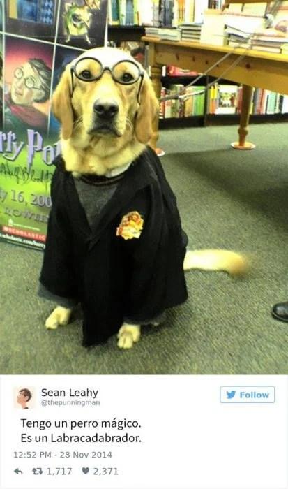 perro potter