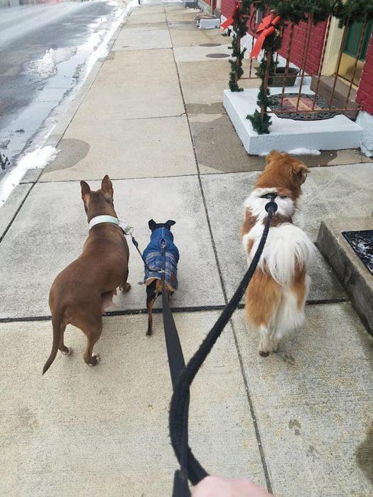 perritos correa