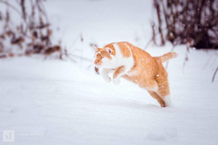 Gatito que naci%C3%B3 sin ojos recreoviral 11 730x487 - Conoce a Kazou, un gatito sin ojos que se robará tu corazón