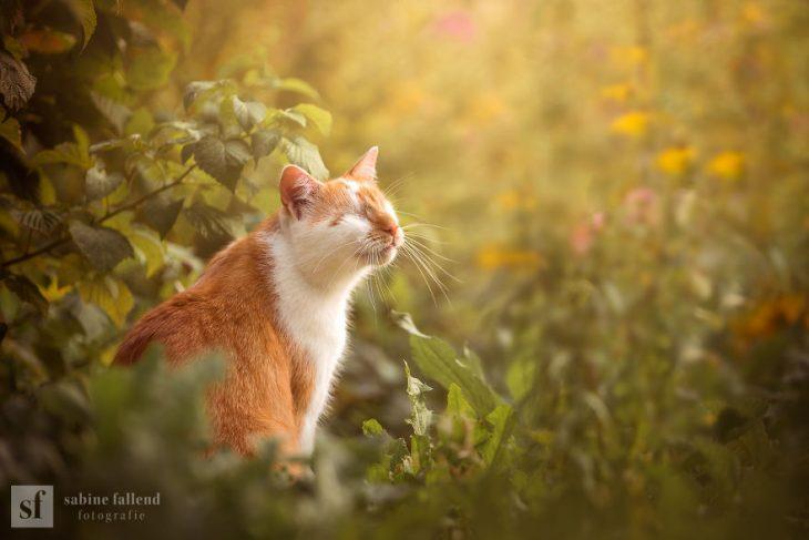 Gatito que naci%C3%B3 sin ojos recreoviral 3 730x487 - Conoce a Kazou, un gatito sin ojos que se robará tu corazón