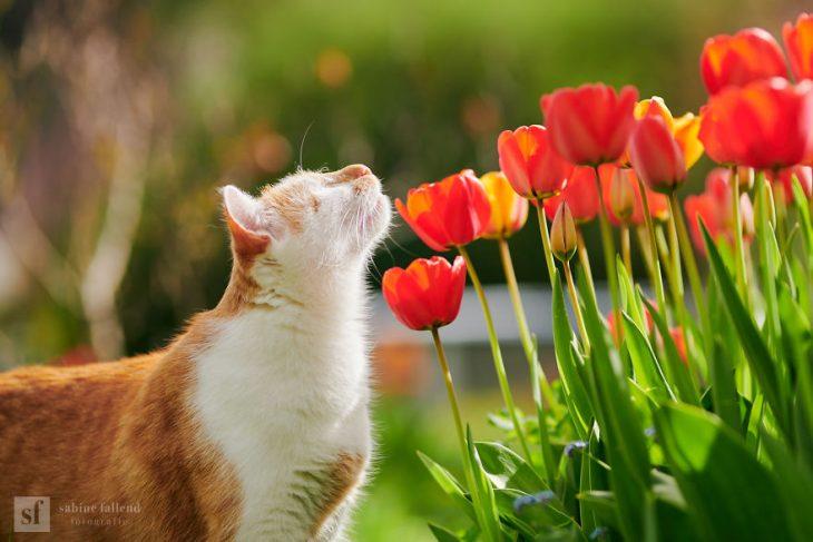 Gatito que naci%C3%B3 sin ojos recreoviral 5 730x487 - Conoce a Kazou, un gatito sin ojos que se robará tu corazón