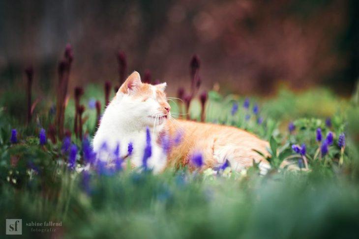 Gatito que naci%C3%B3 sin ojos recreoviral 8 730x487 - Conoce a Kazou, un gatito sin ojos que se robará tu corazón