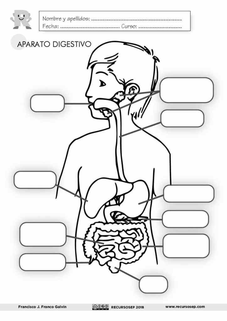 El Aparato Digestivo Láminas Para El Aula Y Fichas Para El