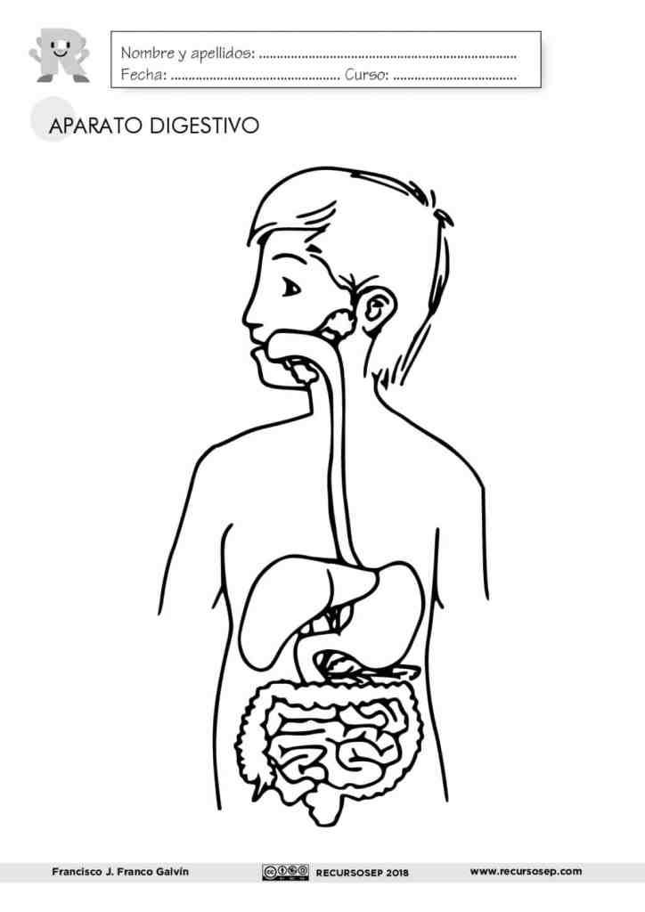El Aparato Digestivo Láminas Para El Aula Y Fichas Para