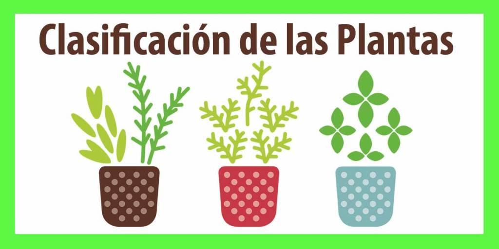 clasificacion de las plantas primero de eso