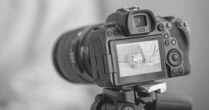 5 Cursos De Fotografía Impartidos Por La Universidad Estatal De Michigan