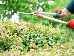 庭木の剪定写真4
