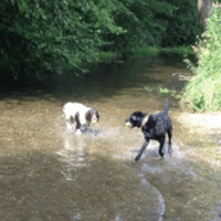 Dog Walking Basingstoke