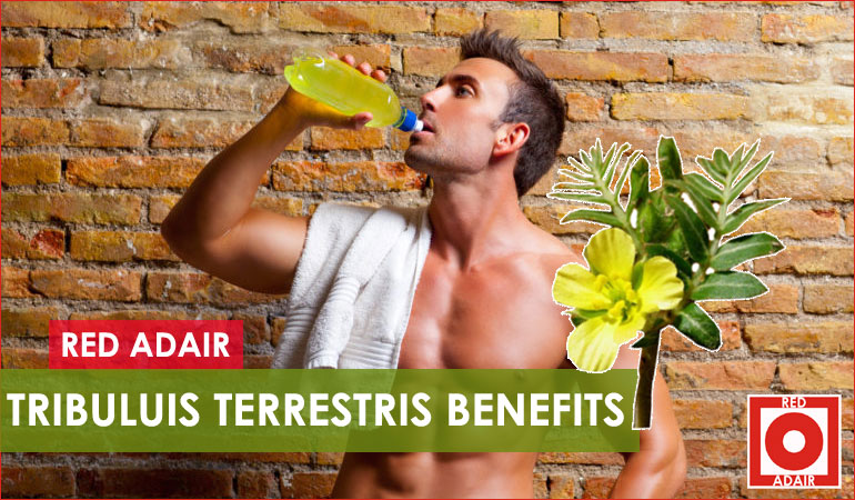 benefits of Tribulus Terrestris