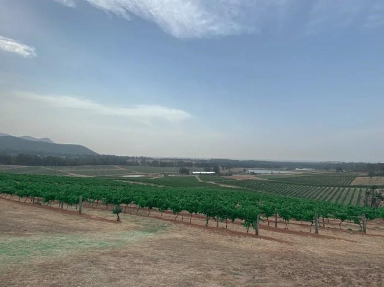 View over Audrey Wilkinson vineyards