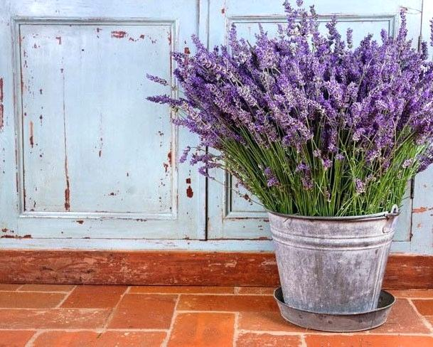 garden | does lavender repel bed bugs
