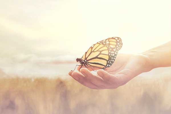 what does it mean when a butterfly lands on you