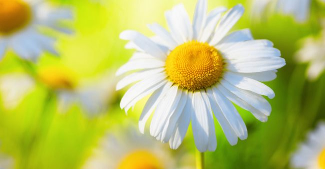 WHAT YOUR BIRTH FLOWER REVEALS ABOUT YOU
