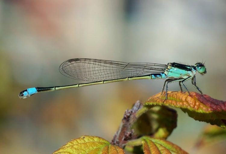 DRAGONFLY SYMBOLISM IN THE BIBLE