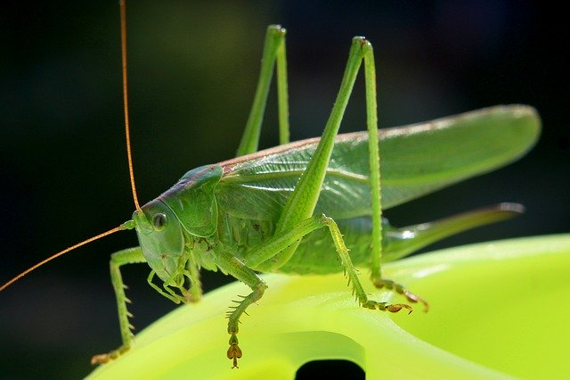 Prophetic And Spiritual Meaning Of A Cricket
