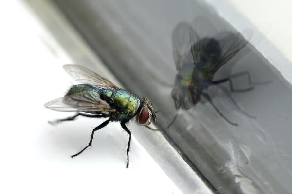 Prophetic and spiritual meaning of flies