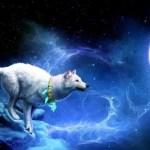 Totem Animals   Spirit Animal, Symbolism and Meaning