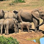 What Does It Mean When You Dream About Elephants?
