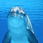 Dolphin meaning in christianity