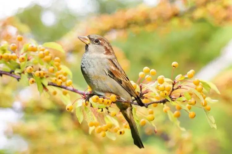 Sparrow Christian Dream Symbol