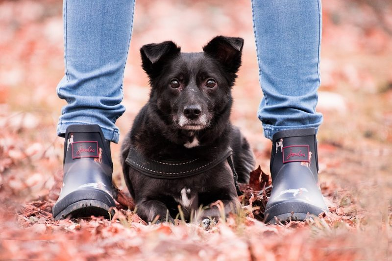 What does it mean when a dog sits on your feet