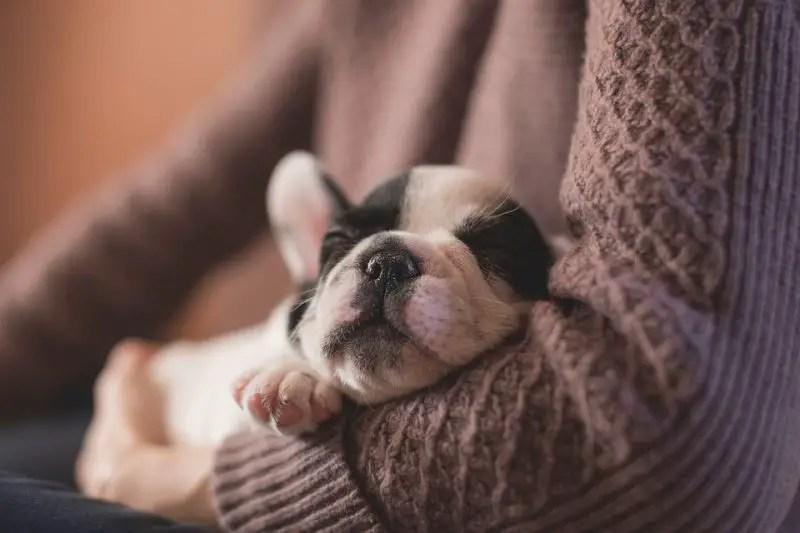 Can I Use Hydrocortisone Cream on My Dog?