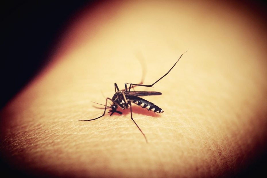 How To Remove Dark Spots On Legs From Mosquito Bites