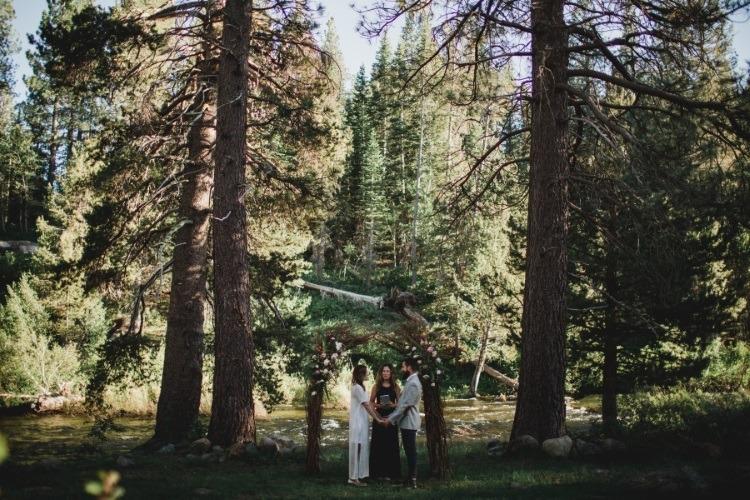 Dancing Pines1
