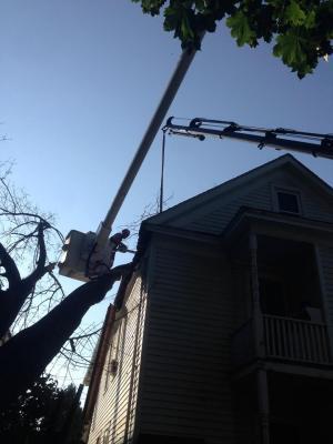 professional arborist equipment